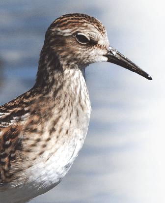 DOA fera le Grand Défi Québec-Oiseaux.